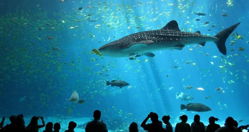 水族館虐待動物爭議有解?好萊塢特效團隊打造會表演的「機械海豚」 跟真的一模一樣!