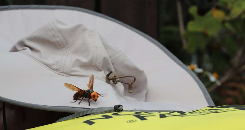 揮手驅趕只會增加被蜂螫的機率!誤闖虎頭蜂棲地遭攻擊怎麼辦?專家2大招教你脫離險境