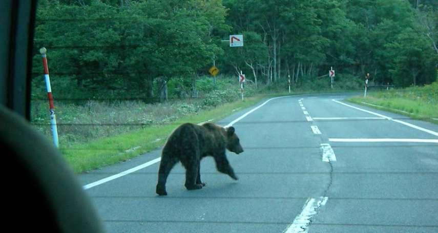 熊出沒注意!北海道出動「機器狼」驅趕野熊,當地官員大讚「效果奇佳」