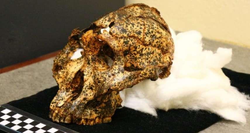 200萬年前古人類頭骨化石在南非出土:「牙大腦小」,吃塊莖、樹皮維生