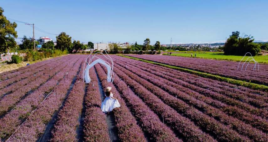 紫色狂潮即將來襲 仙草花打造浪漫仙境