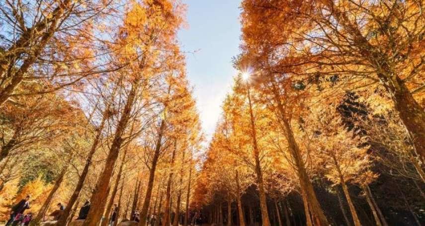 2021南投景點推薦》全台唯一黃金水杉森林!賞空靈瀑布、楓紅秒飛異國,公開杉林溪生態園區5大景點