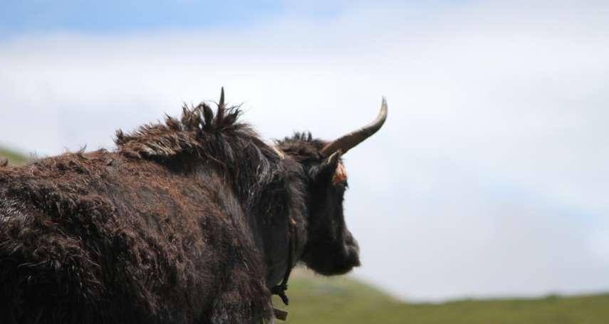 王明珂專文:羌族有神農縮百草的精神,騎上「川馬」沒有馬上英姿
