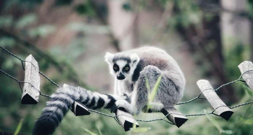 動物的尾巴到底有什麼作用?人類其實有尾巴?多數人不知道的冷知識大揭密!