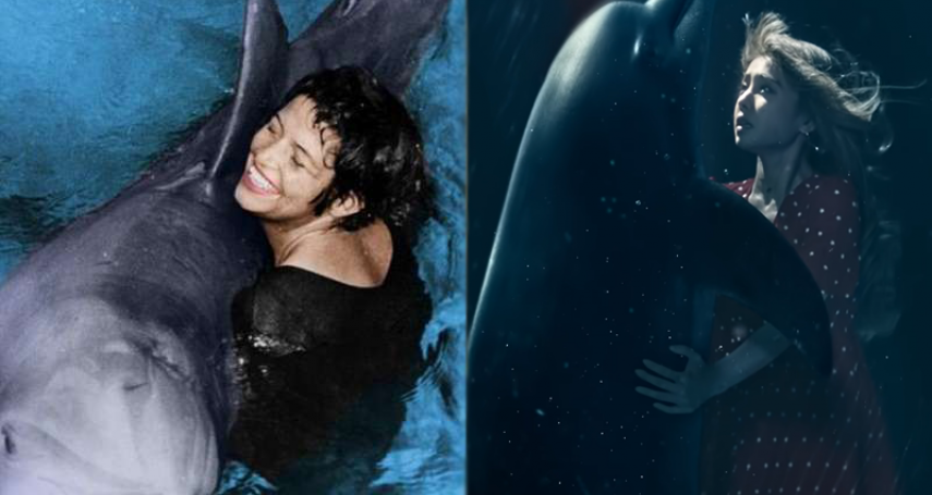 MV甜秘密的真實故事》海豚真的會為愛殉情?一場隱瞞60年的暗黑實驗,人豚戀結局讓人超意外