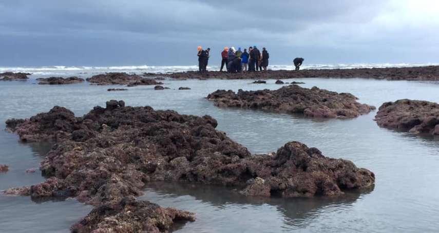 天然氣接收站避藻礁?民眾黨揭政府沒講的3件事:只有公投可捍衛藻礁
