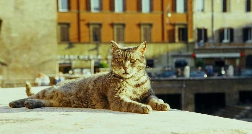 凱撒大帝遇刺身亡的劇場,如今已被喵星人攻佔!義大利「最萌古蹟」的人貓情緣