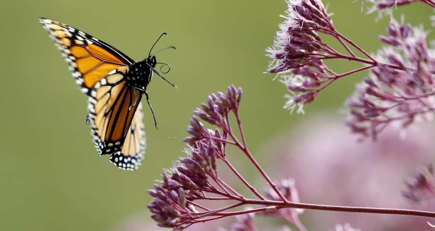 蟲蟲危機》人類熱愛滅蟲,忽視保育……光害、殺蟲劑、除草劑使昆蟲面臨生存浩劫