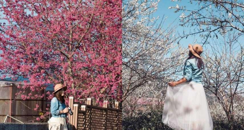 台灣最美賞花景點在這!南投草坪頭粉桃色櫻花、上千顆梅樹一次看,加碼周遭4大絕美景點