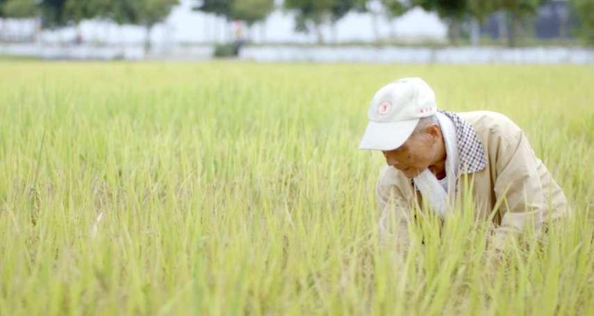 台灣70年前的土地改革真的成功了嗎?揭秘戰後農業發展的3大致命危機