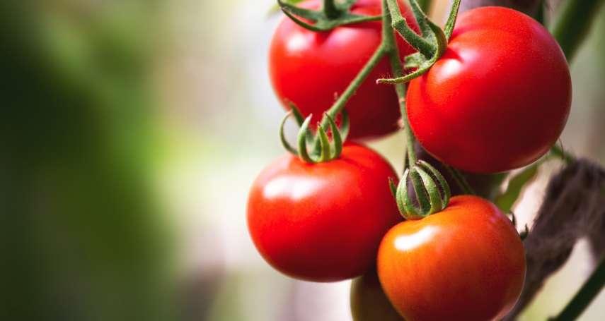 吃番茄就能放鬆又好眠?日本研究讓番茄也能成為保健食品