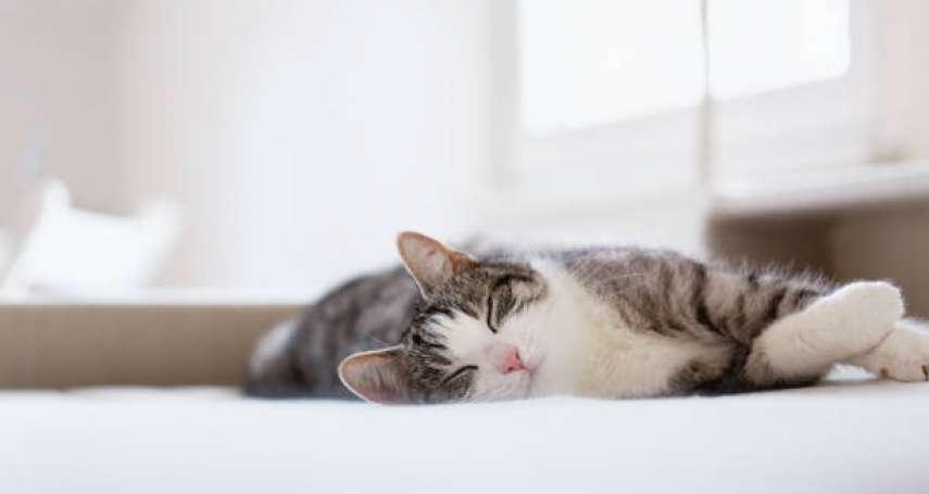 一定要換位思考、理解別人的心情嗎?試著轉換成「貓咪模式」,讓你的人生更輕盈!