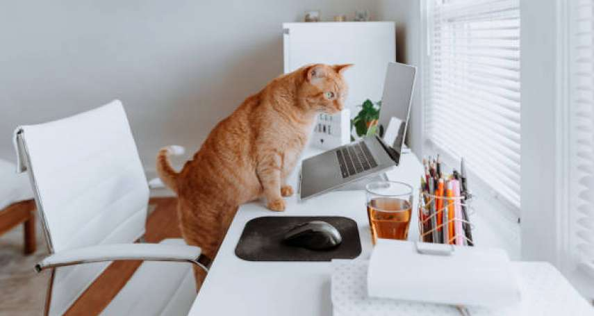 貓咪發出呼嚕聲代表開心?獸醫師親自解答:原來背後有這麼多意義!