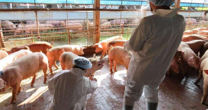 新北市漂流豬檢出非洲豬瘟 嘉義縣全面警戒