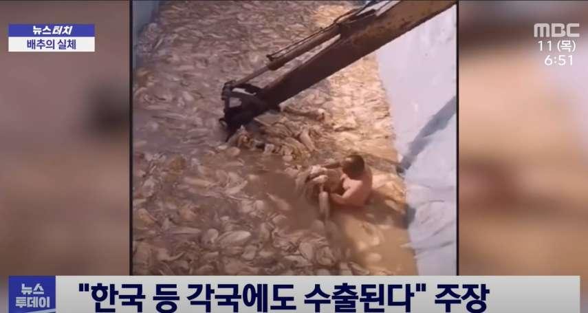 影片曝光》中國泡菜作法刷新三觀!大叔裸半身赤腳狂踩、老鼠在旁邊跑...韓國網友嚇傻發起拒吃運動