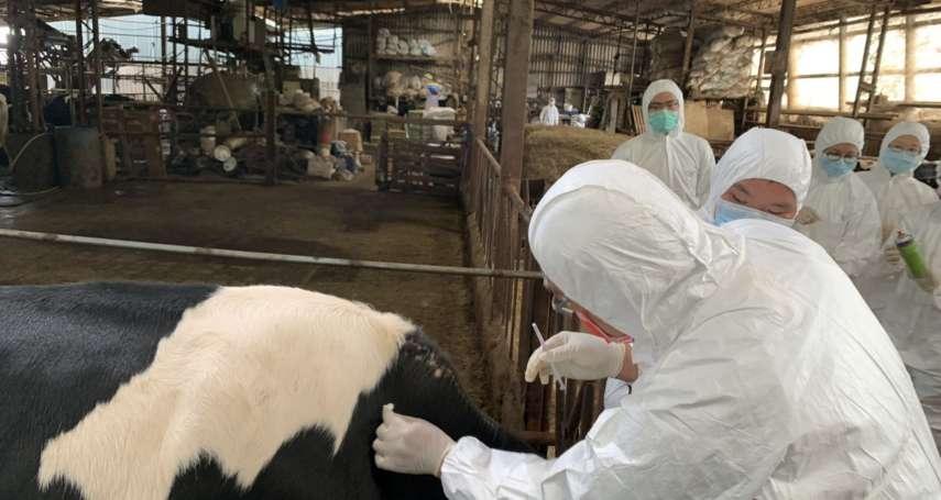 免擔心! 新北牛場全面完成施打牛結節疹疫苗