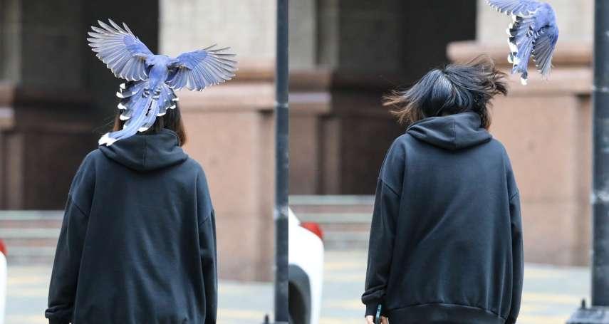 不能還手!文大生被台灣藍鵲「巴頭」照曝光 教授:被國寶打值得炫耀