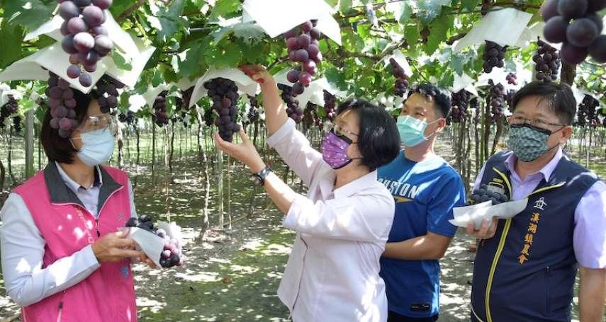 彰化葡萄產區夏果進入盛產期 王惠美參訪溪湖鎮葡萄果園力挺農友