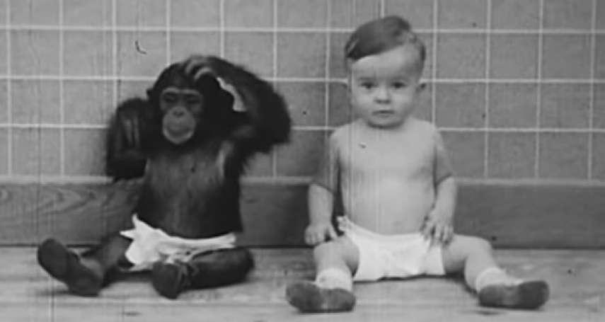 為了證明動物能變成人類,心理學家讓黑猩猩與親兒子一起生活…實驗結果讓他不寒而慄