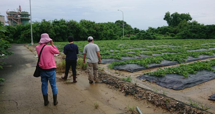 6月下旬豪雨農損 高市岡山西瓜及香瓜現金救助即起受理