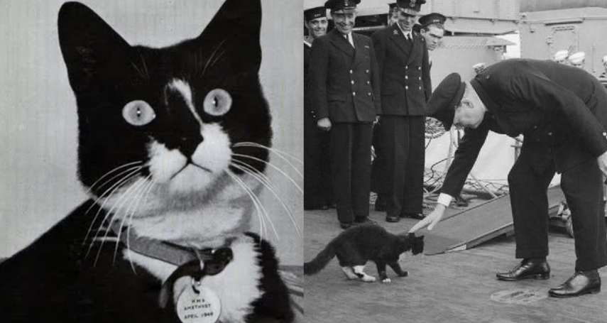 二戰最帶衰的「吉祥物」!牠搭上5艘戰艦全被擊沉,數次死裡逃生害慘人…水手怕爆:別再上船了