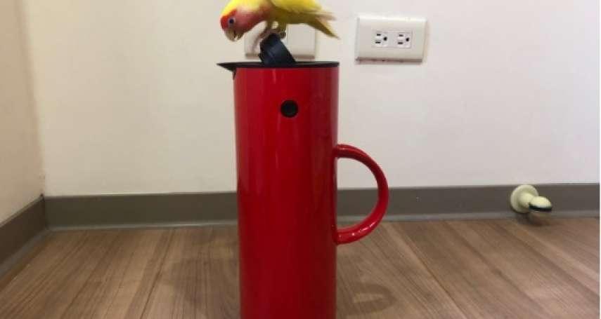 鸚鵡與啄木鳥壺防疫新關係 引發網友熱議!