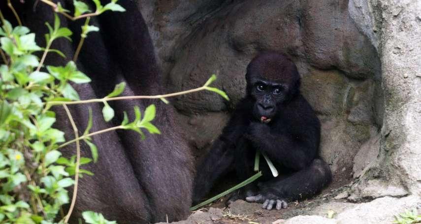 直擊》史無前例放2個多月大假 北市動物園「寶寶們」激增