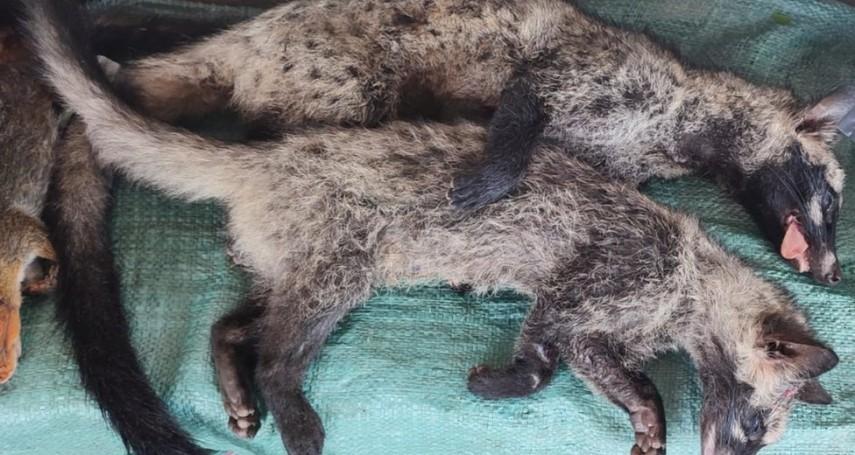 新冠溯源無定論 BBC:東南亞野生動物交易「死灰復燃」