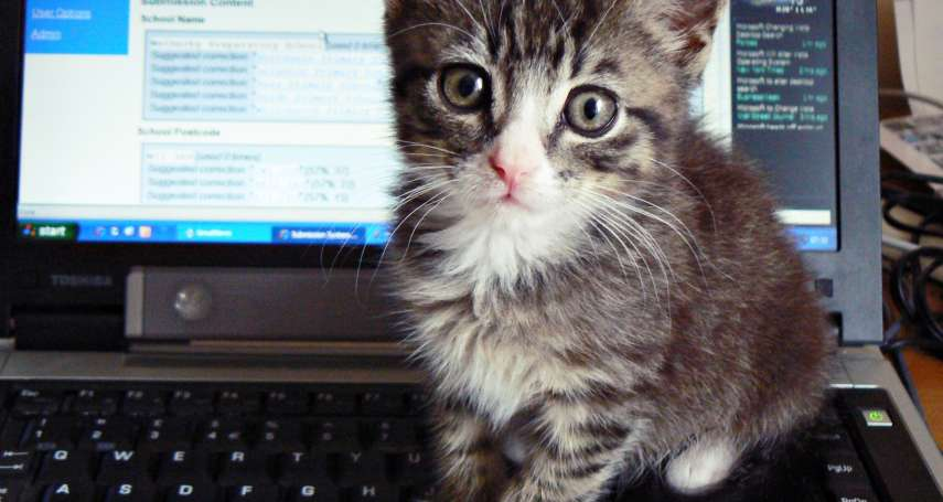 為什麼貓咪總喜歡躺在書桌上妨礙你工作呢?專家解答!