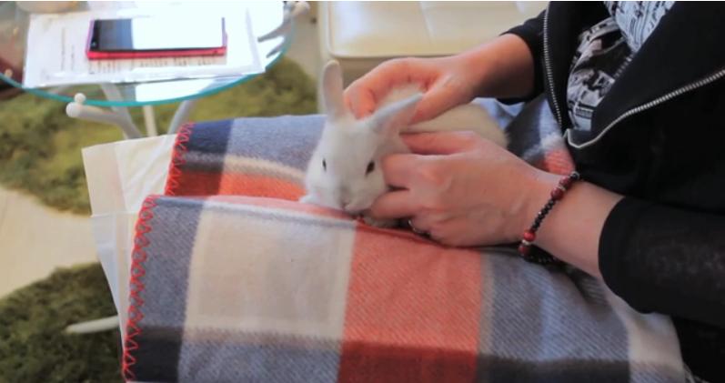 看著可愛的小動物,讓心理也柔軟起來(圖/擷自影片)
